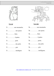 Description Pluriel les rats_01